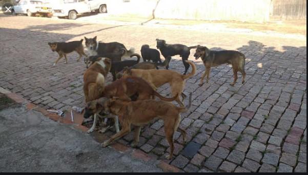 Animais nas ruas: aluna é mordida por cachorro no caminho para a escola